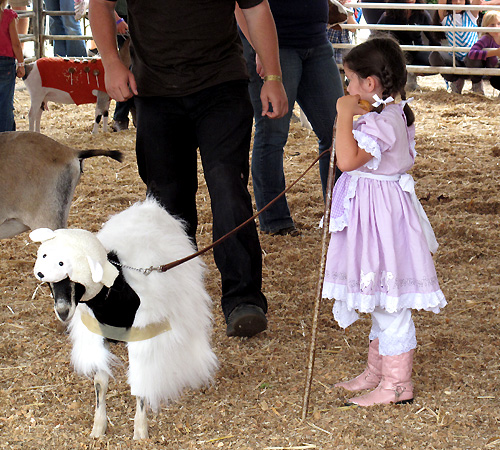 County Fair with Pictures (5/6)