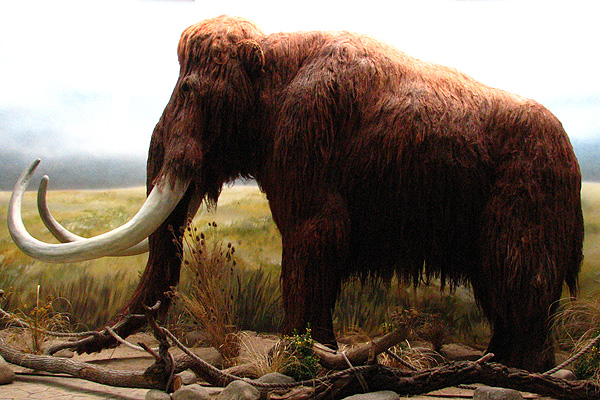 Bring back the mammoth!