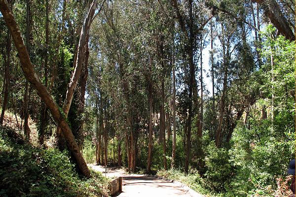 canyon-eucalyptus