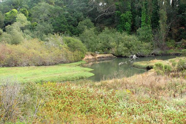 creek1