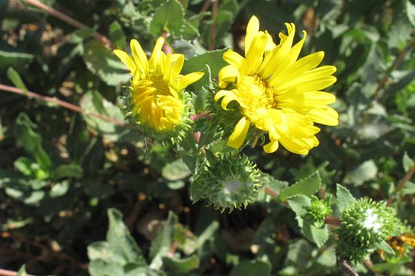 flower-closeup-1