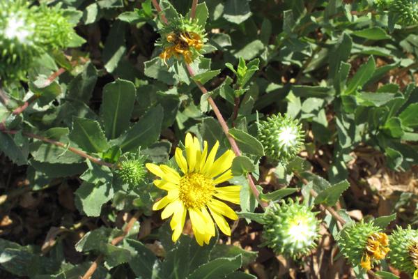 flower-closeup-2
