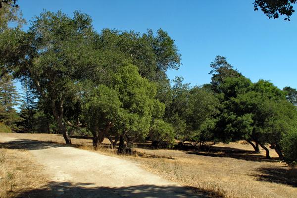 oaken-field