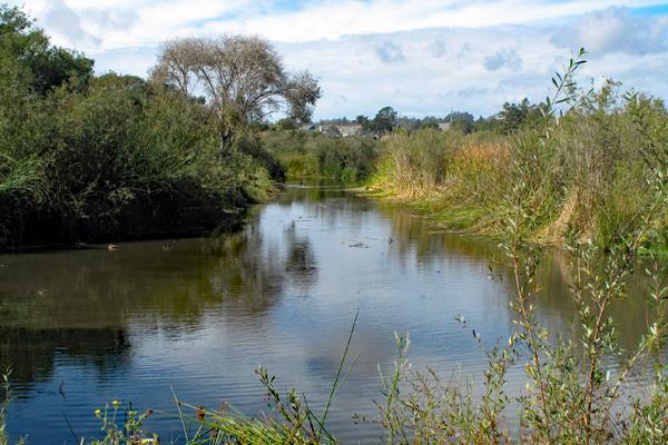 tule-marsh